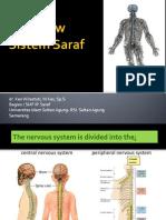 Overview Sistem Saraf