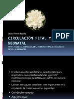 circulacinfetalyneonatal-130102221052-phpapp02