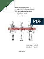 trabajo sobre el sistema óseo humano