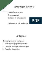 Enteric Pathogen Bacteria Dr Erly