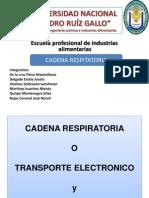 UNIVERSIDAD NACIONAL.pptx Cadena Respiratoria