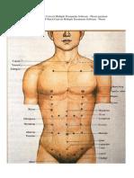 106117479-acupuntura-mapas-zonales