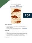 Case Study of Leptospirosis