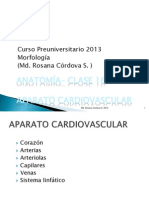 clase 15 - Anatomía