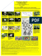 Cartel CIentifica Daturaspp