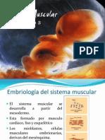 Embriologia Muscular