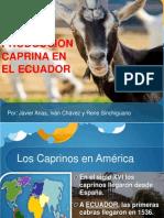 Caprinos Ecuador