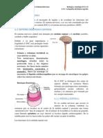 Sistema-nervioso TUTORIA 1