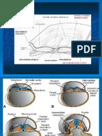 Morfología del sistema articular