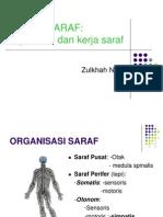 Saraf perifer 1