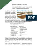 IMPORTANCIA ECOLÓGICA DE LAS CHINAMPAS