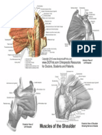Shoulder Anatomy Hand Out 2