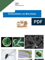 Conociendo las Bacterias.ppt