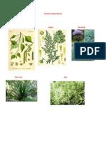 PLANTAS MEDICINALES1