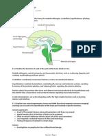 E5 the Human Brain