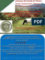 Campeche 1