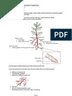 9.2 Transport in Angiospermophytes