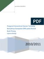 Laporan Biologi DNA Ekstrak Pisang Edit