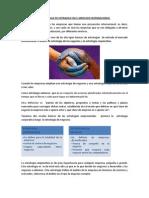 Estrategias de Entradas en El Mercado Internacional