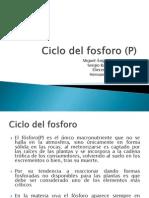 Ciclo del fosforo (P).pptx