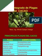MIP CACAO - 2013