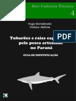 Tubarõs e Raias Capturadas pela Pesca Artesanal no Paraná (Guia de Identificação)