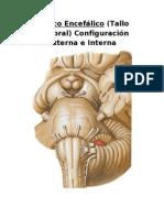Tronco Encefálico (Tallo Cerebral) (2)