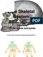 Easy Skeletal System