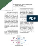 apuntescompletosderepro-101112161301-phpapp01
