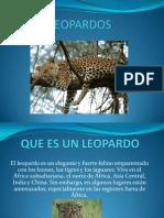 Leopardo s