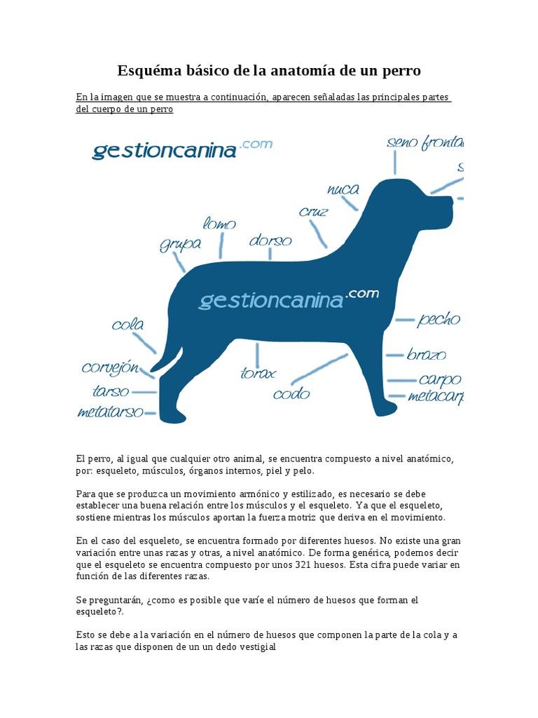 Esquema Basico de La Anatomia de Un Perro