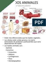 tejidosanimales-111114151140-phpapp01.ppt