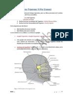 Nervio Trigemino Ramas(1)