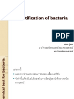 Examples of Bacterial Identification