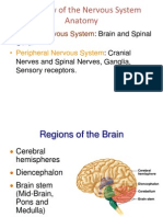 Overview of the Nervous System Anatomy