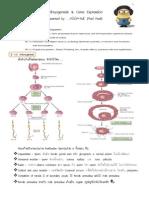 สรุป Embryogenesis for MED2UP