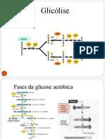 glicolise-1