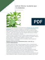 Aprende a Cultivar Stevia