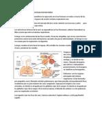 funcion e higiene del sistema respiratorio