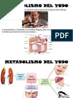 Metabolismo Del Yodo