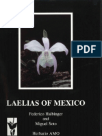 Orquidea(Mex.)15