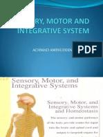 Sensory, Motor and Integrative System