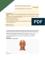 Divisiones topograficas del ser humano.docx