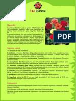 Garofano.pdf