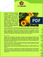 Helicriso.pdf