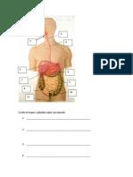 Control Sist. Digestivo Martes 26 Marzo