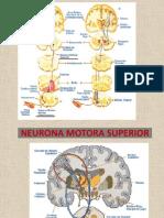 Neuropediatria 1