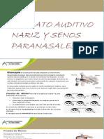 Aparato Auditivo Y La Nariz