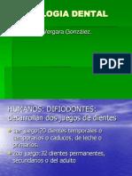 morfologiadental2-110226130048-phpapp02