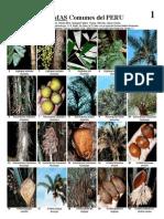 056 Peru-Palms v1.2